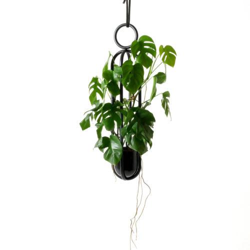 Blumenampel von Atelier Haussmann mit Monstera Pflanze, hängendes Objekt für Pflanzen und Blumen