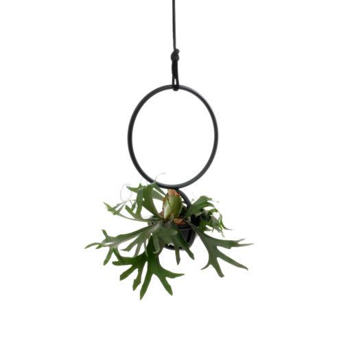 Die Blumenkugel ist wie eine Blumenampel, hängendes Objekt aus Rundrohr schwarz matt mit weiche Schale aus Pvc, für Pflanzen und Blumen